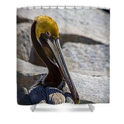 Looking Good Shower Curtain by Marvin Spates