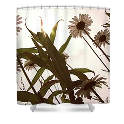 Looking Up Shower Curtain by Amy Tyler