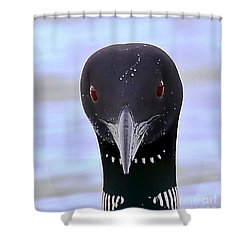 Loon Portrait Shower Curtain by Peter Gray