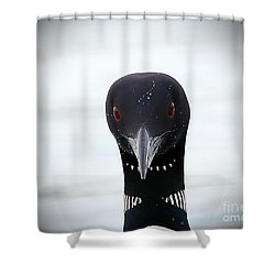 Loon Stare Shower Curtain by Peter Gray