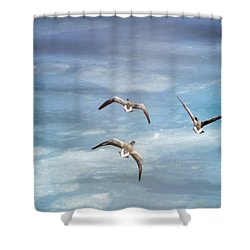 Loons Over Ice - Three Shower Curtain by Vicki Jauron