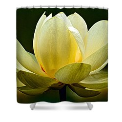 Lotus Blossom Shower Curtain by Christopher Holmes