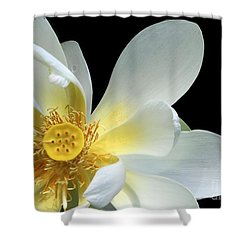 Lotus From Above Shower Curtain by Sabrina L Ryan