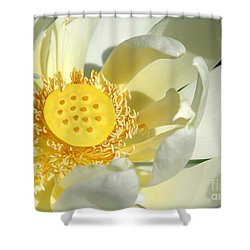 Lotus Up Close Shower Curtain by Sabrina L Ryan