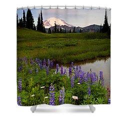 Lupine Sunrise Shower Curtain by Mike  Dawson