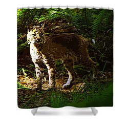 Lynx Rufus Shower Curtain by David Lee Thompson