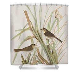 Macgillivray's Finch  Shower Curtain by John James Audubon