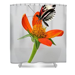 Magical Butterfly Shower Curtain by Sabrina L Ryan