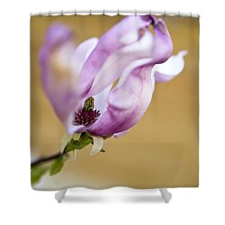 Magnolia Flower Shower Curtain by Frank Tschakert