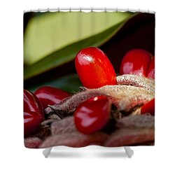 Magnolia Seeds Shower Curtain by Christopher Holmes