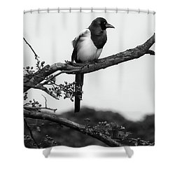 Magpie  Shower Curtain by Philip Openshaw