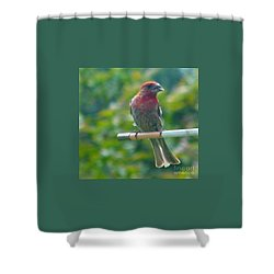 Male Crossbill With Sunflower Seed    August  Indiana Shower Curtain by Rory Cubel