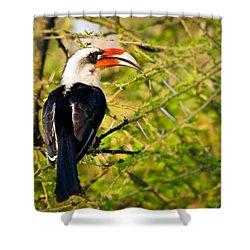 Male Von Der Decken's Hornbill Shower Curtain by Adam Romanowicz
