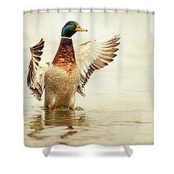 Mallard Shower Curtain by Everet Regal