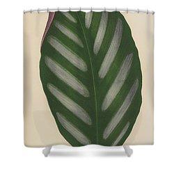 Maranta Porteana Shower Curtain by English School