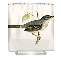 Marmora's Warbler Shower Curtain by English School