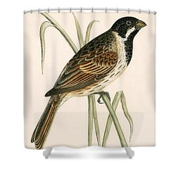 Marsh Bunting Shower Curtain by English School