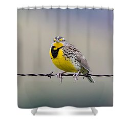 Meadowlark Stare Shower Curtain by Marc Crumpler