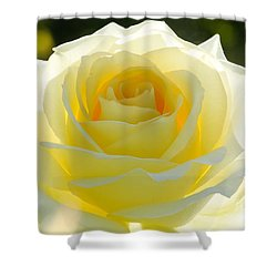 Mellow Yellow Rose Shower Curtain by Sabrina L Ryan