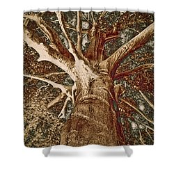 Shower Curtain featuring the painting Mighty Tree by Frank Tschakert