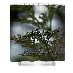 Mirrored Shower Curtain by Linda Shafer