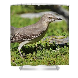 Mockingbird Foraging 1 Shower Curtain by Linda Brody