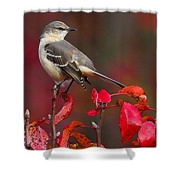 Mockingbird On Red Shower Curtain by William Jobes