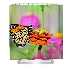 Shower Curtain featuring the photograph Monarch On A Zinnia by Rodney Campbell