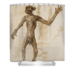 Monkey Standing, Anterior View Shower Curtain by George Stubbs