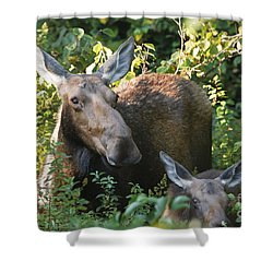 Moose - White Mountains New Hampshire  Shower Curtain by Erin Paul Donovan