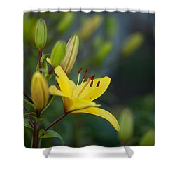 Morning Lily Shower Curtain by Mike Reid