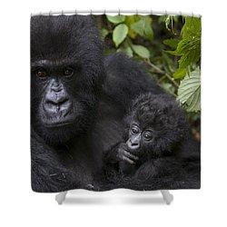 Mountain Gorilla Mother Holding 3 Month Shower Curtain by Suzi Eszterhas