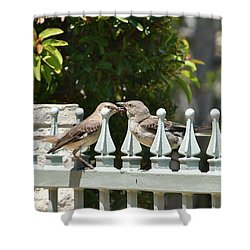 Mr And Mrs Mockingbird With Worms Shower Curtain by Linda Brody