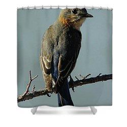 Mrs. Bluebird Shower Curtain by Robert Frederick