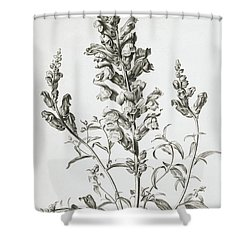 Mufle De Veau Shower Curtain by Gerard van Spaendonck