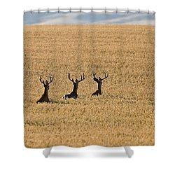 Mule Deer In Wheat Field Shower Curtain by Mark Duffy
