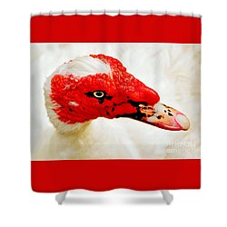 Muscovy Duck Shower Curtain by Kaye Menner