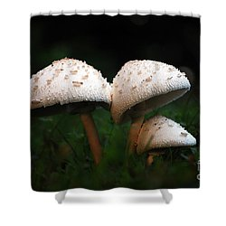 Mushrooms In The Morning Shower Curtain by Robert Meanor