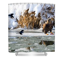 My Lunch Shower Curtain by Mike Dawson