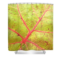 Nature Abstract Sea Grape Leaf Shower Curtain by Carol Groenen