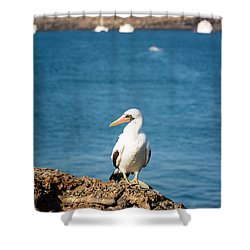 Nazca Booby On A Rock Shower Curtain by Jess Kraft