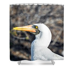 Nazca Booby View Shower Curtain by Jess Kraft