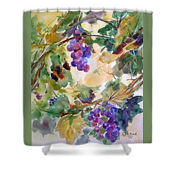 Neighborhood Grapevine Shower Curtain by Kathy Braud