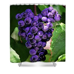New Wine Shower Curtain by Constance Woods