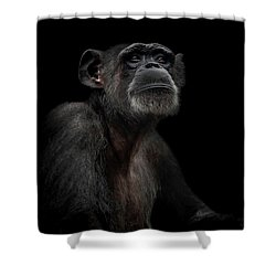 Noble Shower Curtain by Paul Neville