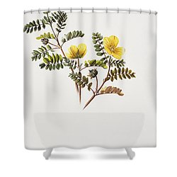 Nohu Flower - Vintage Shower Curtain by Hawaiian Legacy Archive - Printscapes