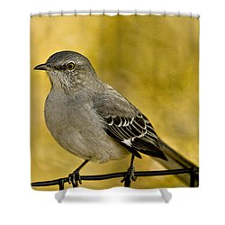 Northern Mockingbird Shower Curtain by Chris Lord
