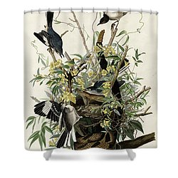 Northern Mockingbird Shower Curtain by Granger