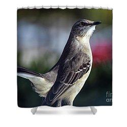 Northern Mockingbird Up Close Shower Curtain by William Tasker
