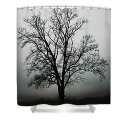 November Tree In Fog Shower Curtain by Patricia Motley